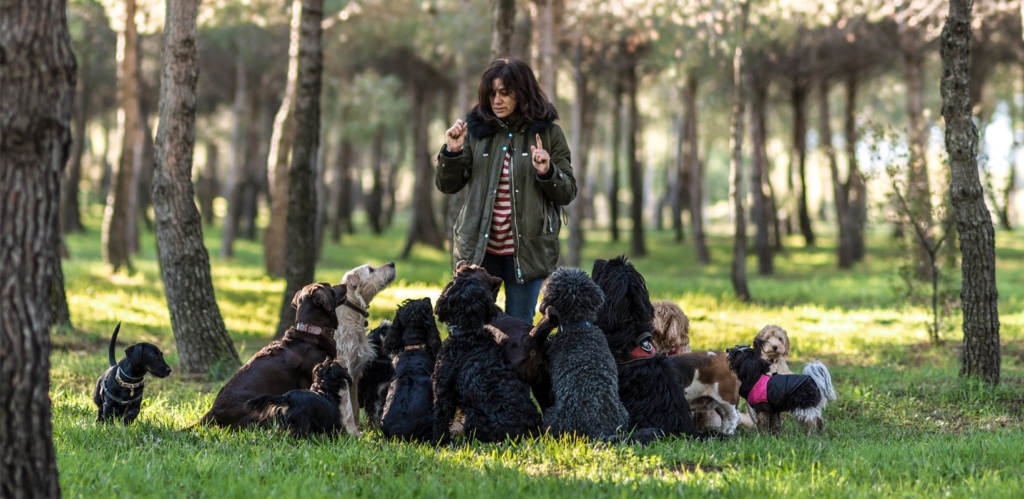 Educación y adiestramiento canino en Madrid